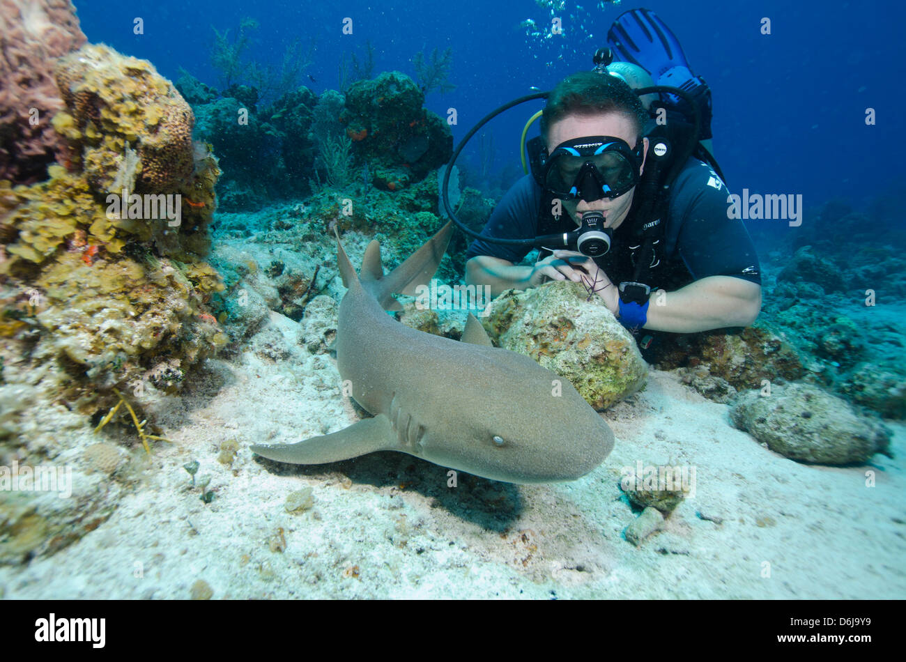 Close encounters with Nurse shark on G Spot Reef, Turks and Caicos, West Indies, Caribbean, Central America - Stock Image