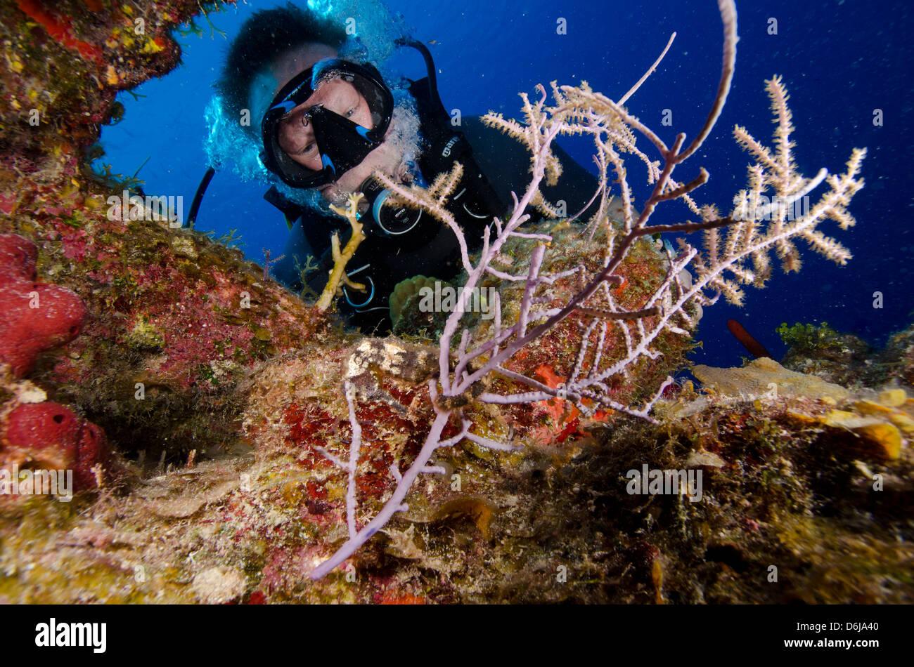West Caicos Stock Photos & West Caicos Stock Images - Alamy