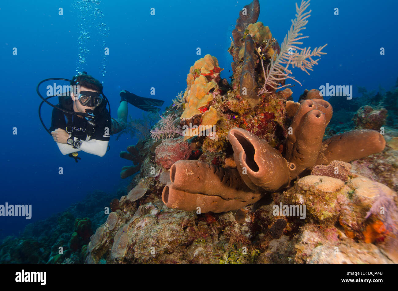 Diver enjoys the stunning reefs of the Turks and Caicos, West Indies, Caribbean, Central America - Stock Image