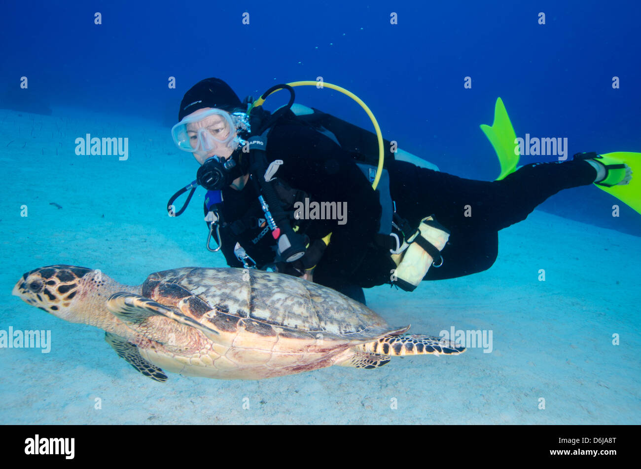 Green turtle cruising the reef with diver, Turks and Caicos, West Indies, Caribbean, Central America - Stock Image