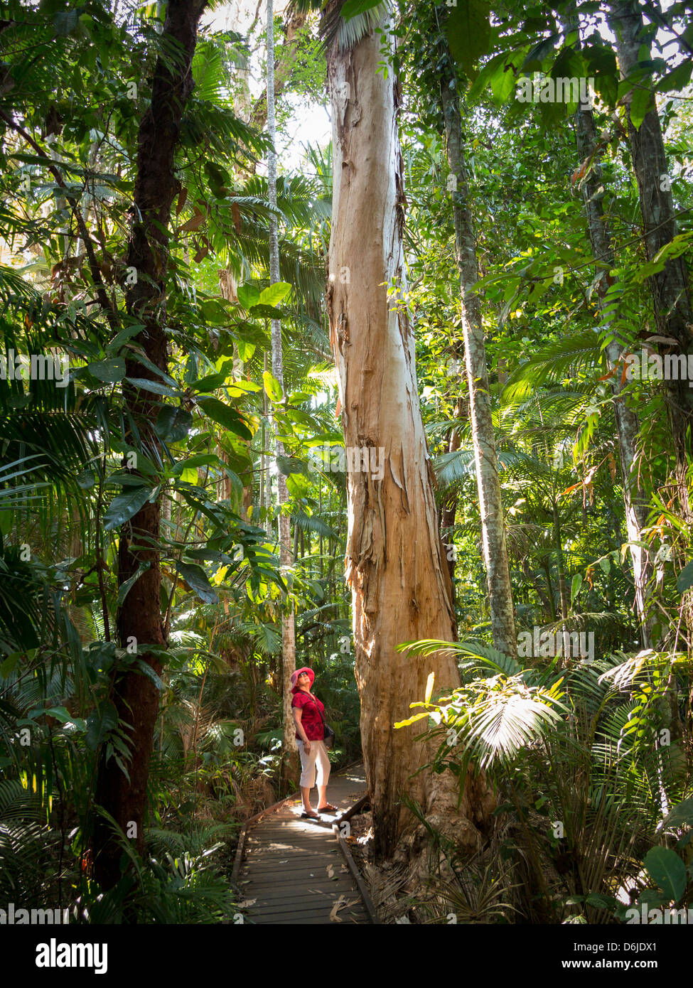 Woman looking at Eucalyptus tree in Flecker Botanic Gardens, Cairns, North Queensland, Australia, Pacific - Stock Image