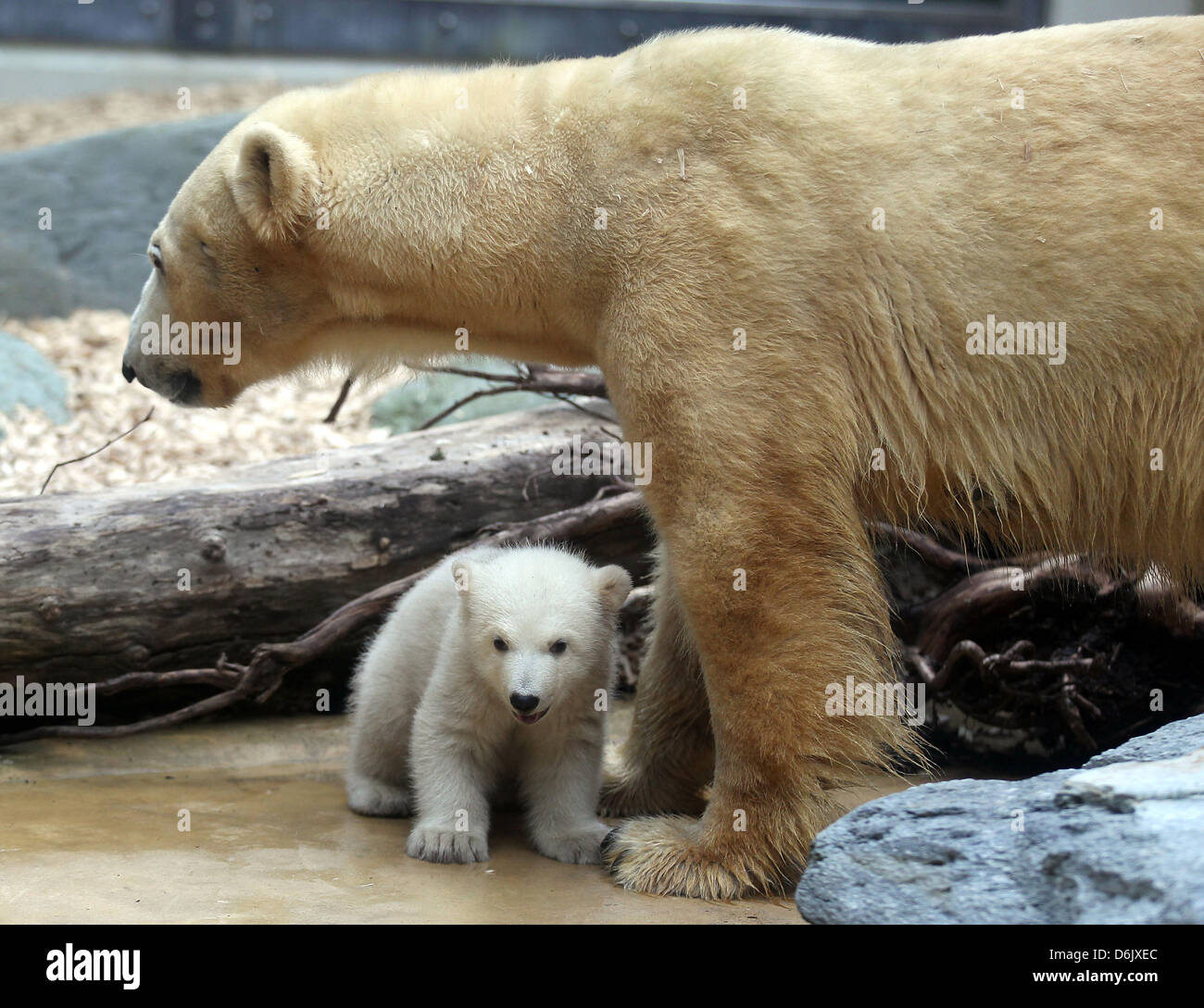 Cub with his two daddy bears