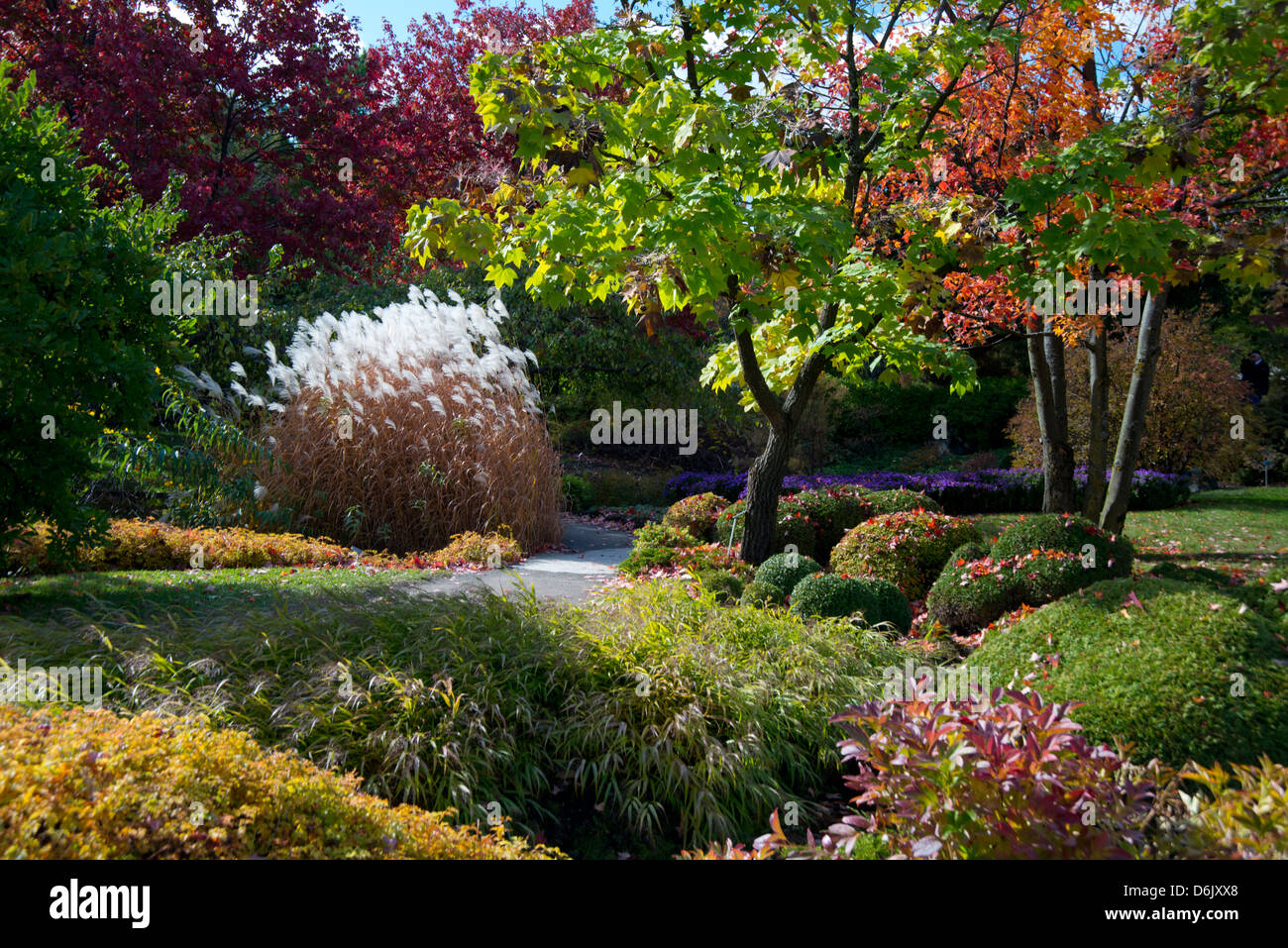 Autumn foliage in The Montreal Botanical Garden, Montreal, Quebec Province, Canada, North America - Stock Image