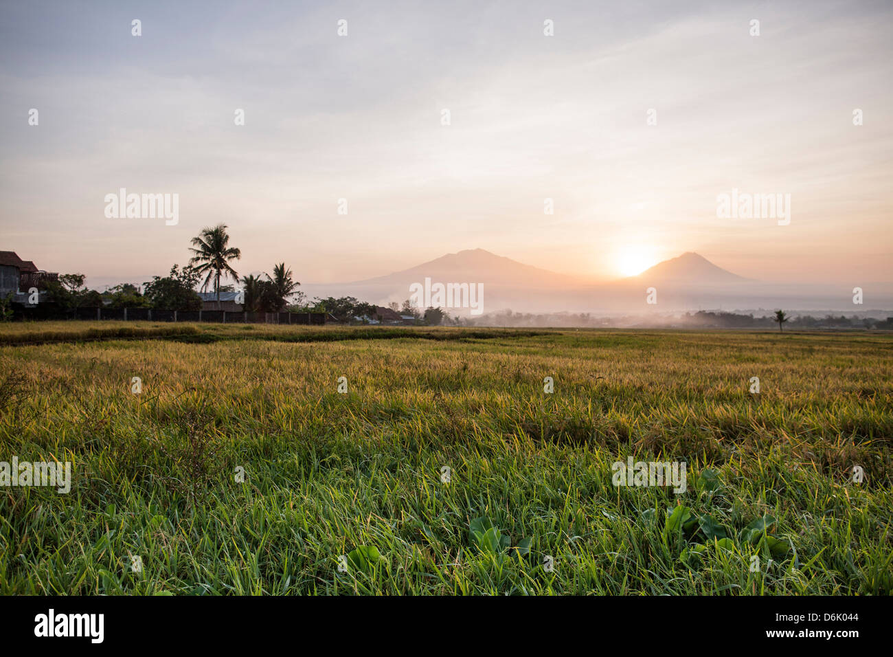 Rice field and volcanoes, Java, Indonesia, Southeast Asia, Asia - Stock Image