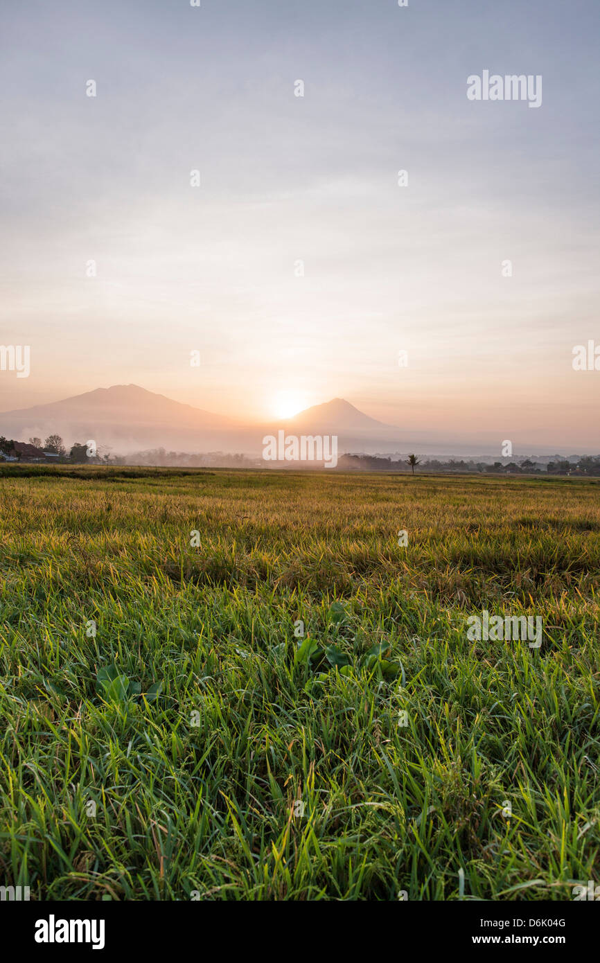 Rice fields and volcanoes, Java, Indonesia, Southeast Asia, Asia - Stock Image