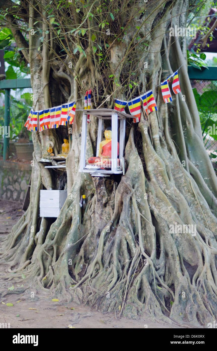 Buddhist tree shrine, Southern Province, Sri Lanka, Asia - Stock Image