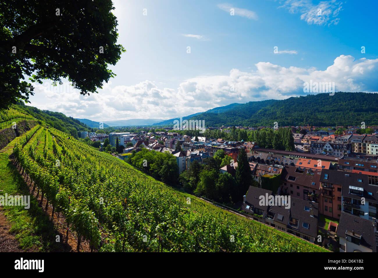 Vineyards, Freiburg, Baden-Wurttemberg, Germany, Europe - Stock Image