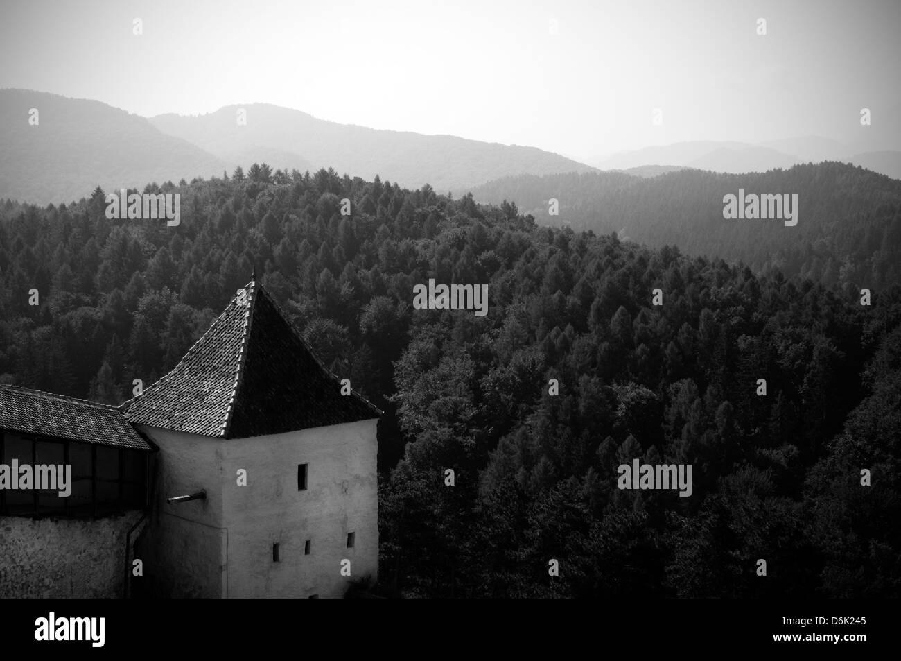 Romania, Transylvania Rasnow forest - Stock Image