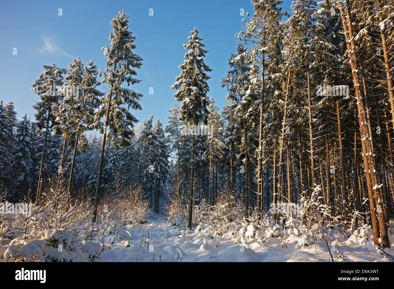 Black Forest in winter, near Villingen-Schwenningen, Schwarzwald-Baar, Baden-Wurttemberg, Germany, Europe Stock Photo