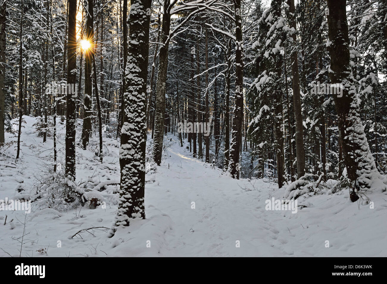 Rural winter scene, near Villingen-Schwenningen, Schwarzwald-Baar, Baden-Wurttemberg, Germany, Europe Stock Photo
