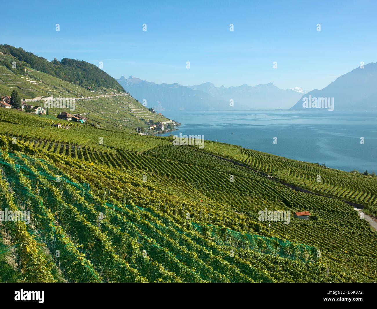 Lavaux terraced vineyards on Lake Geneva, Montreux, Canton Vaud, Switzerland, Europe - Stock Image