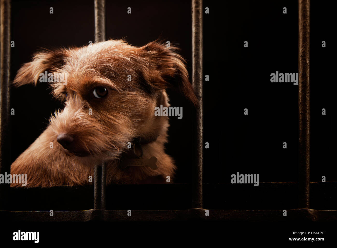 A dog in search of freedom - Stock Image