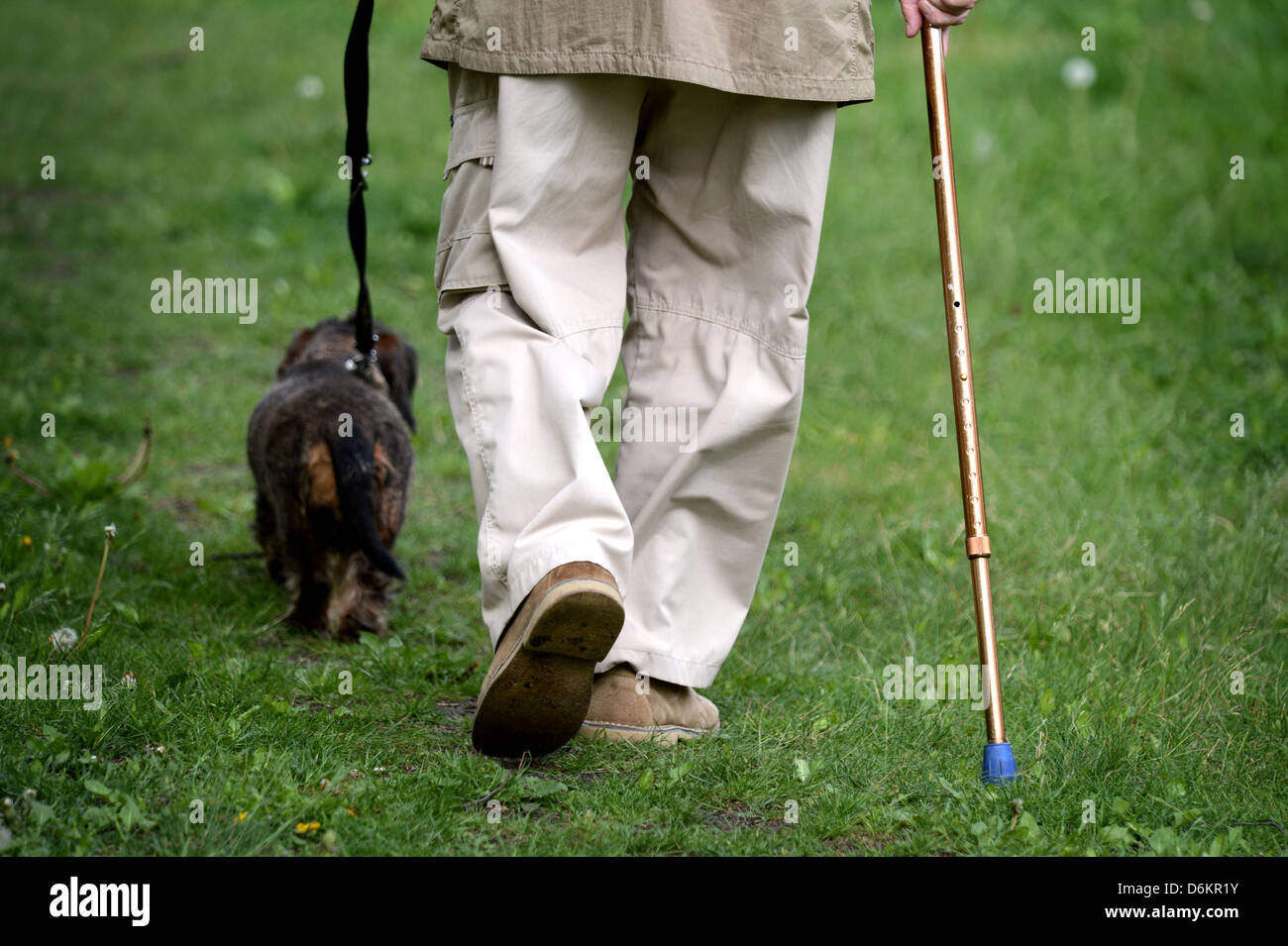 Berlin, Germany, an older man walking with his dog for a walk - Stock Image