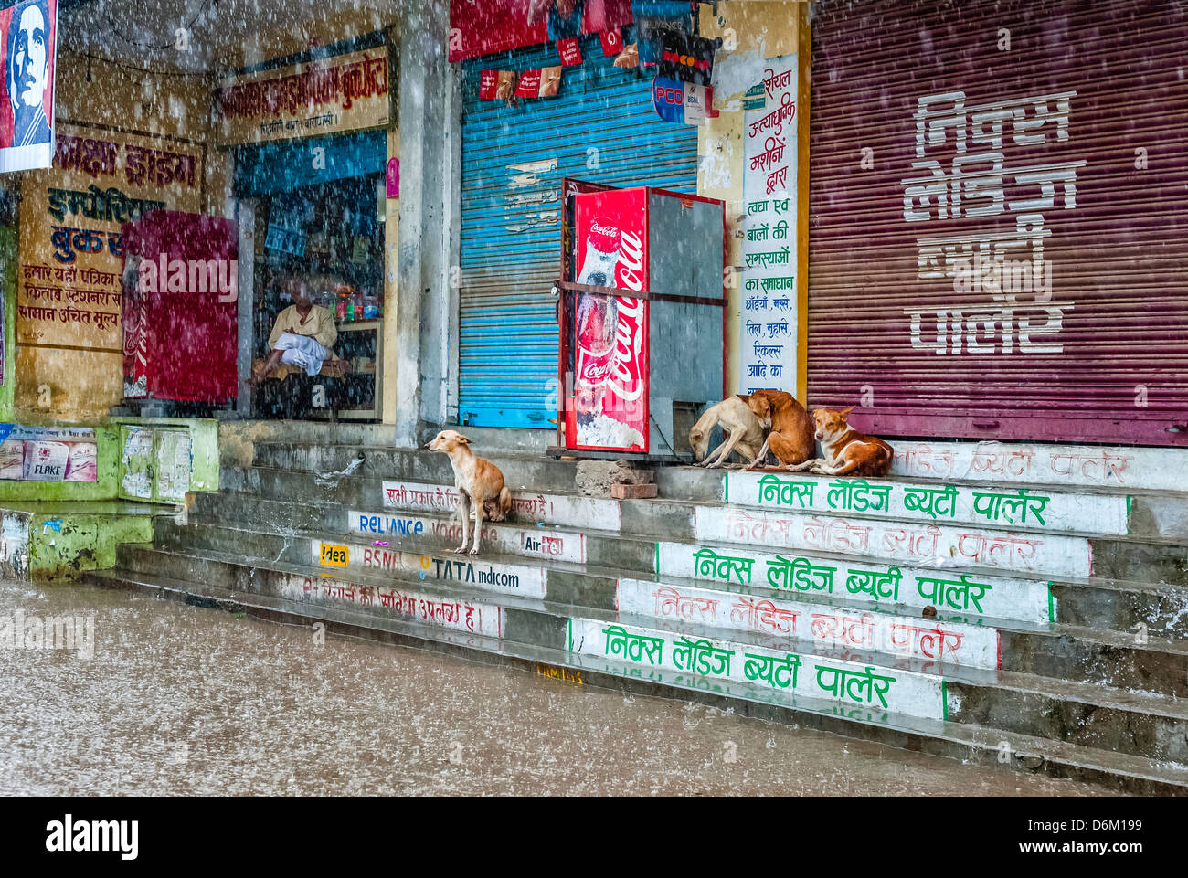 Stray dogs take shelter from heavy monsoon rain and flash flood. A solitary shopkeeper sits at the entrance of his - Stock Image