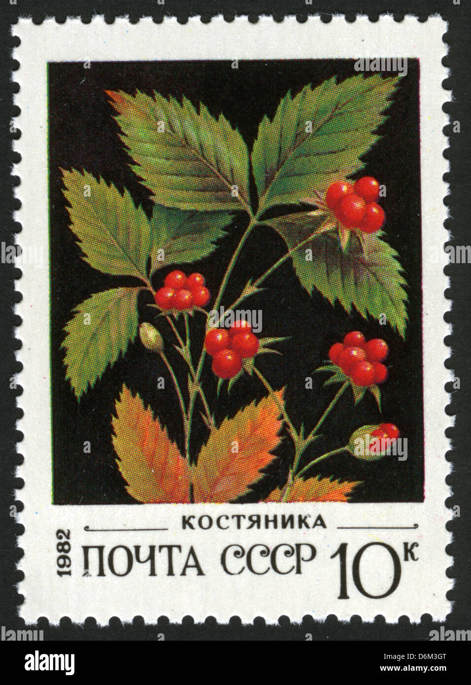 stone berry,USSR,post mark,stamp,1980 year,flowers, plants, flora,flower,berries Stock Photo