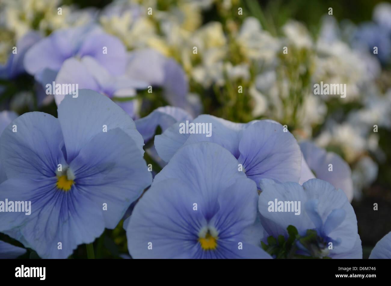 Biru Stock Photos Biru Stock Images Alamy