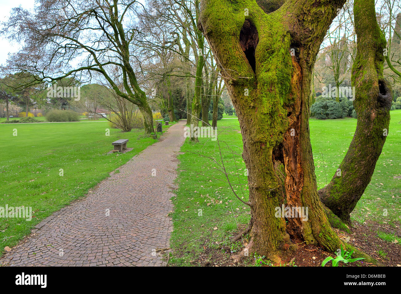 Old tree trunk covered with green moss and narrow walkway among green meadows in botanical park Sigurta in Italy. - Stock Image
