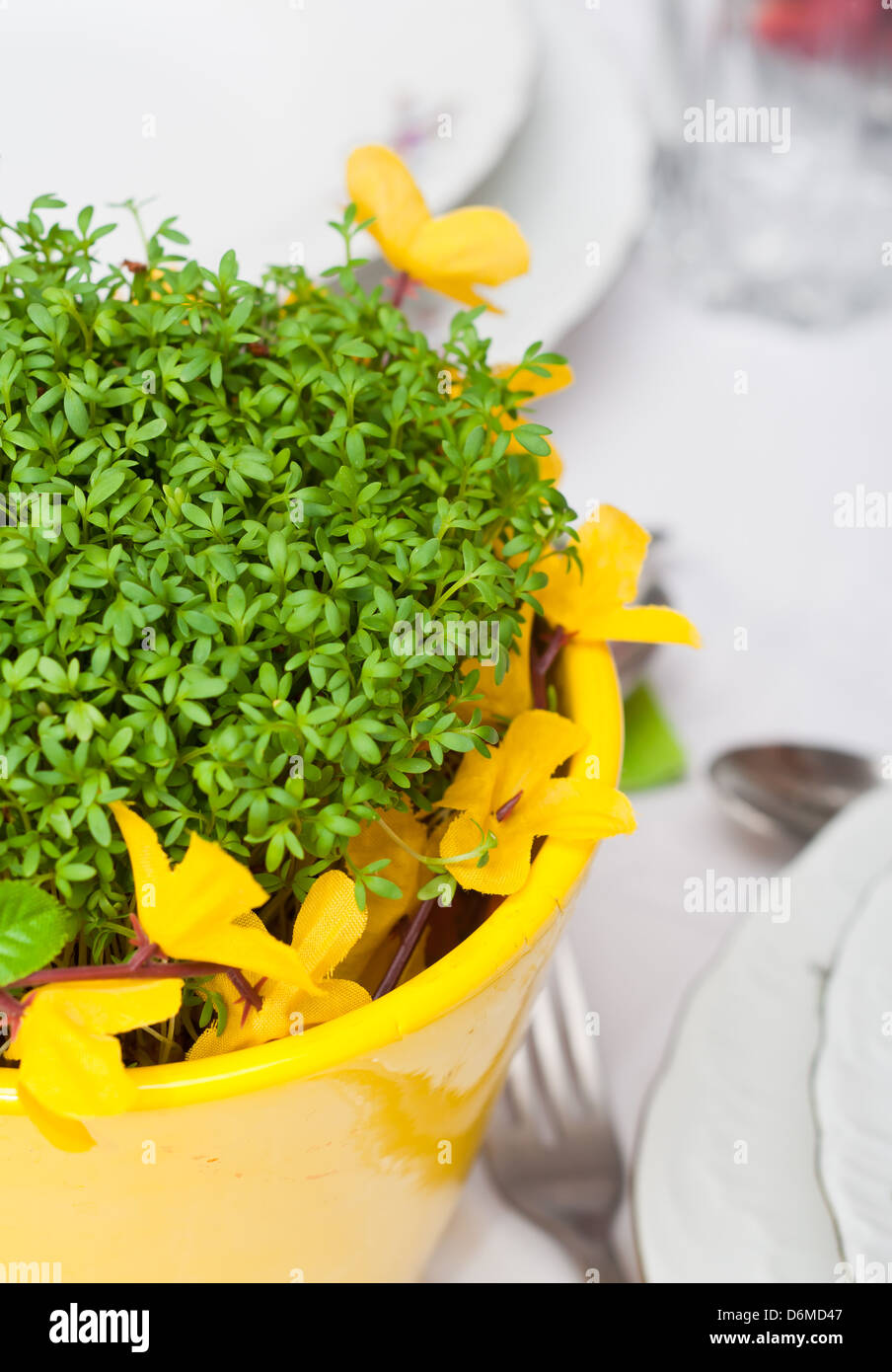 cress in the nice flowerpot - Stock Image