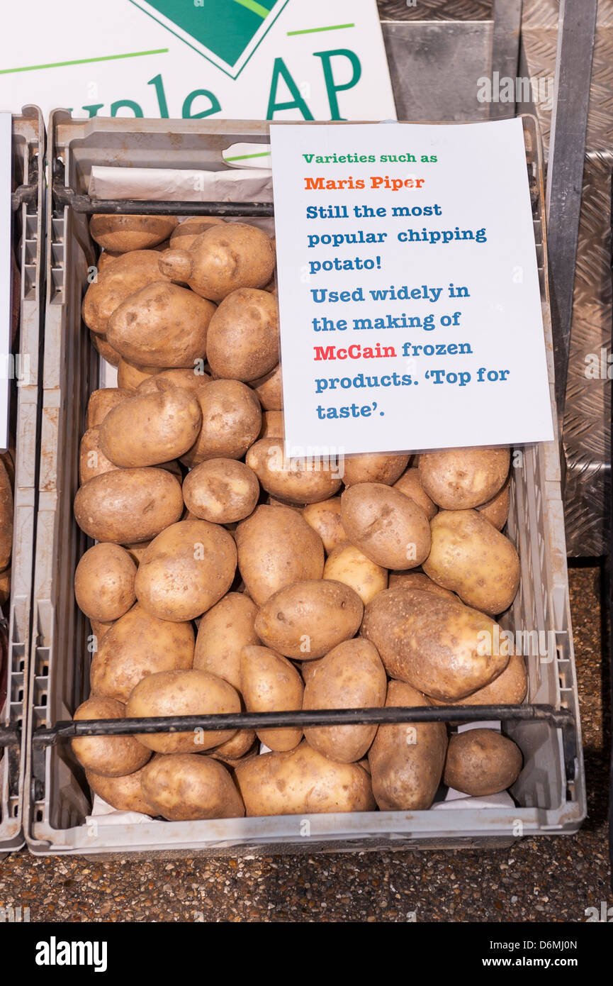 Maris Piper potatos at the Spring Fling In Norwich , Norfolk , England , Britain , Uk - Stock Image