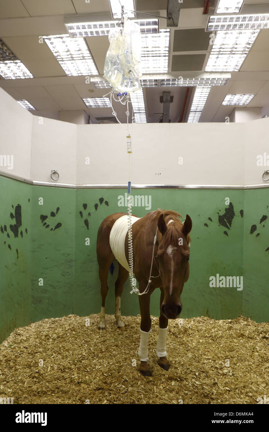 the barn equine surgery stock photos \u0026 the barn equine surgery stockhong kong, china, sick horse receives an infusion stock image