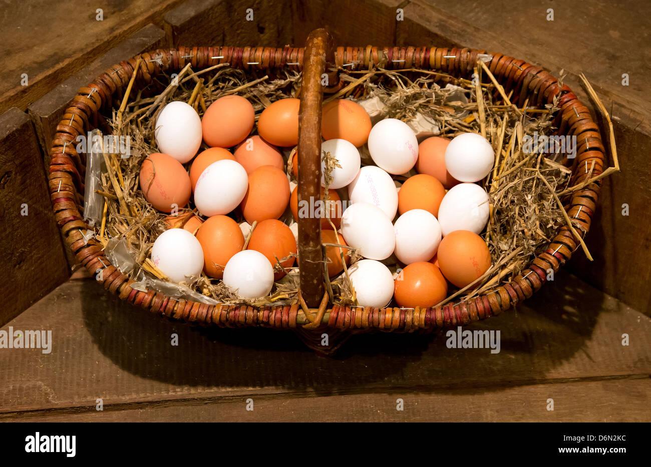 Herten, Germany shopping, eggs from the farm shop Stock Photo