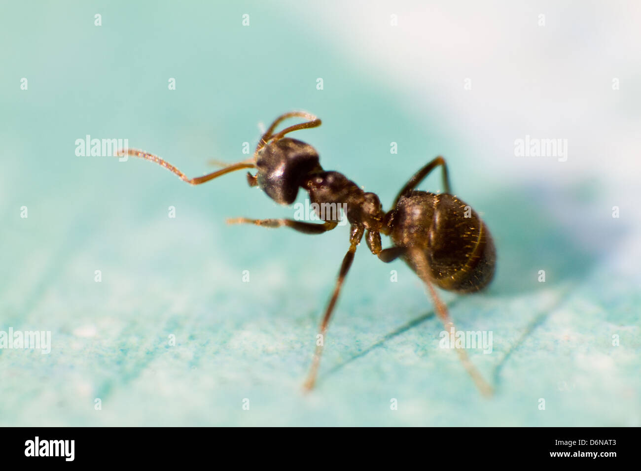 Close Up Ant Stock Photos & Close Up Ant Stock Images - Alamy