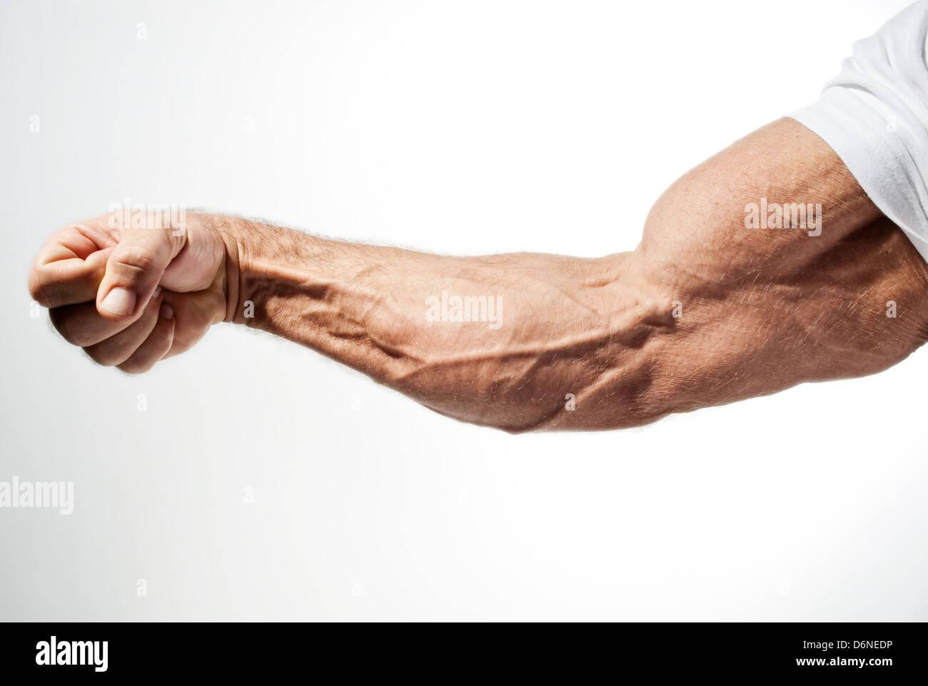 Hamburg, Germany, the arm of a bodybuilder - Stock Image