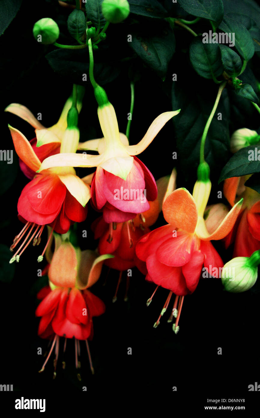 Colorful fresh flowers Stock Photo