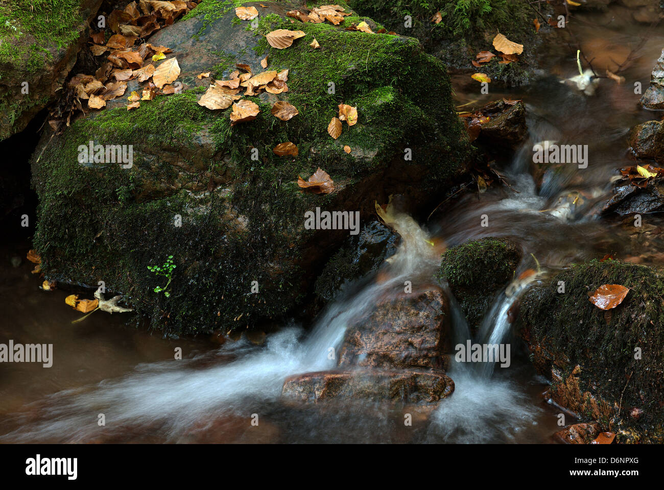 Tabarz, Germany, an autumnal stream in the Thuringian Forest Stock Photo