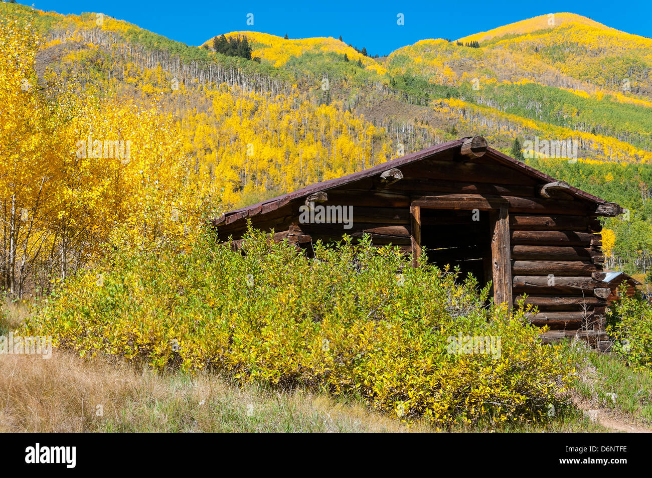 Buildings surrounded by autumn foliage, Ashcroft ghost town, Pitkin County near Aspen, Colorado. - Stock Image