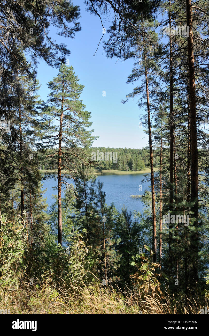 View of Laukanlahti, a branch of Lake Saimaa viewed through Scots pine trees (Pinus sylvestris), Punkaharju, Finland - Stock Image