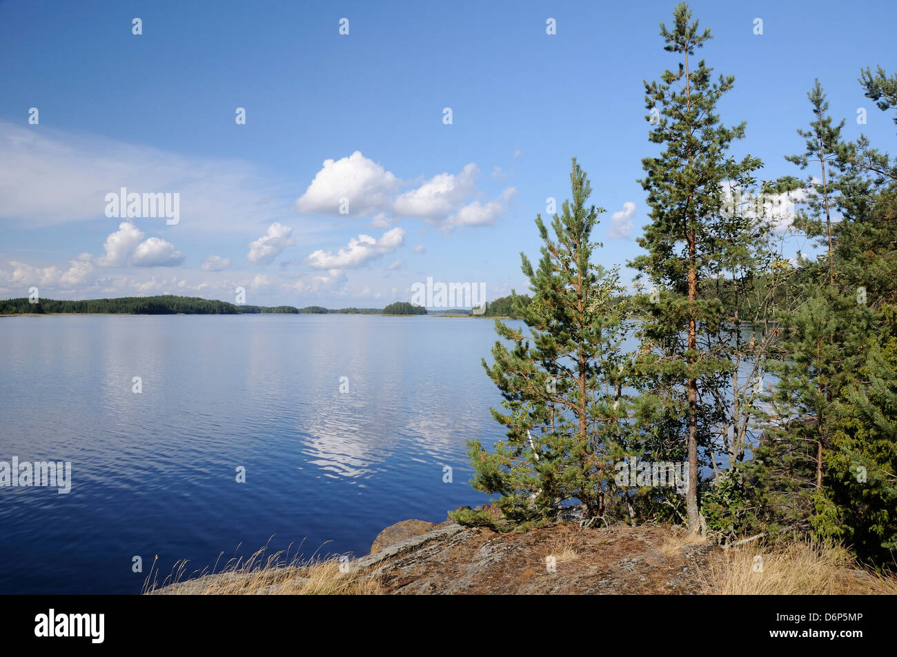 Young Scots pine trees (Pinus sylvestris) growing near rocky shore of Lake Saimaa, near Savonlinna, Finland, Scandinavia, Stock Photo