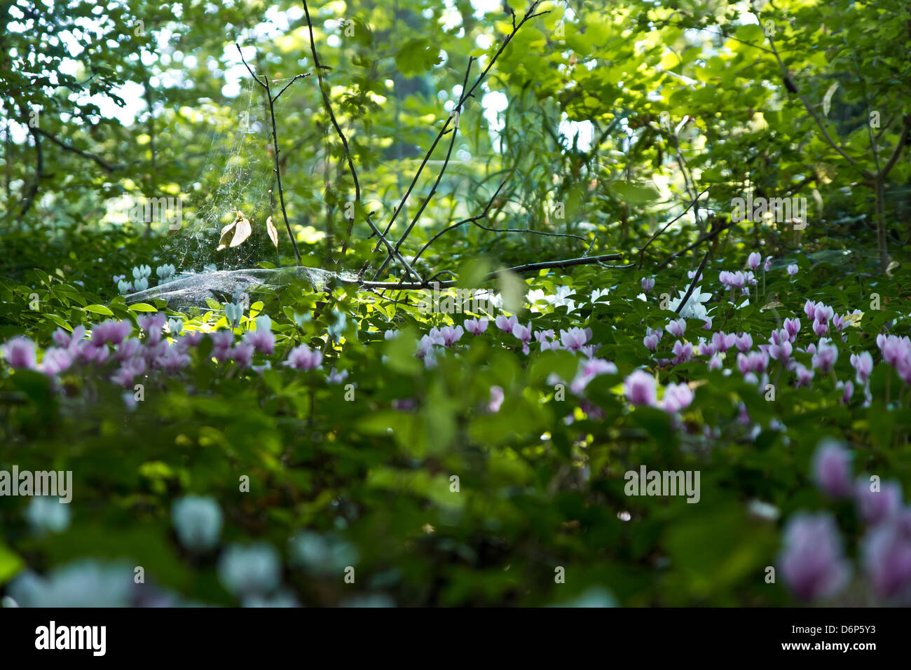 A sunray lightning a cobweb surrounded by flowers. - Stock Image