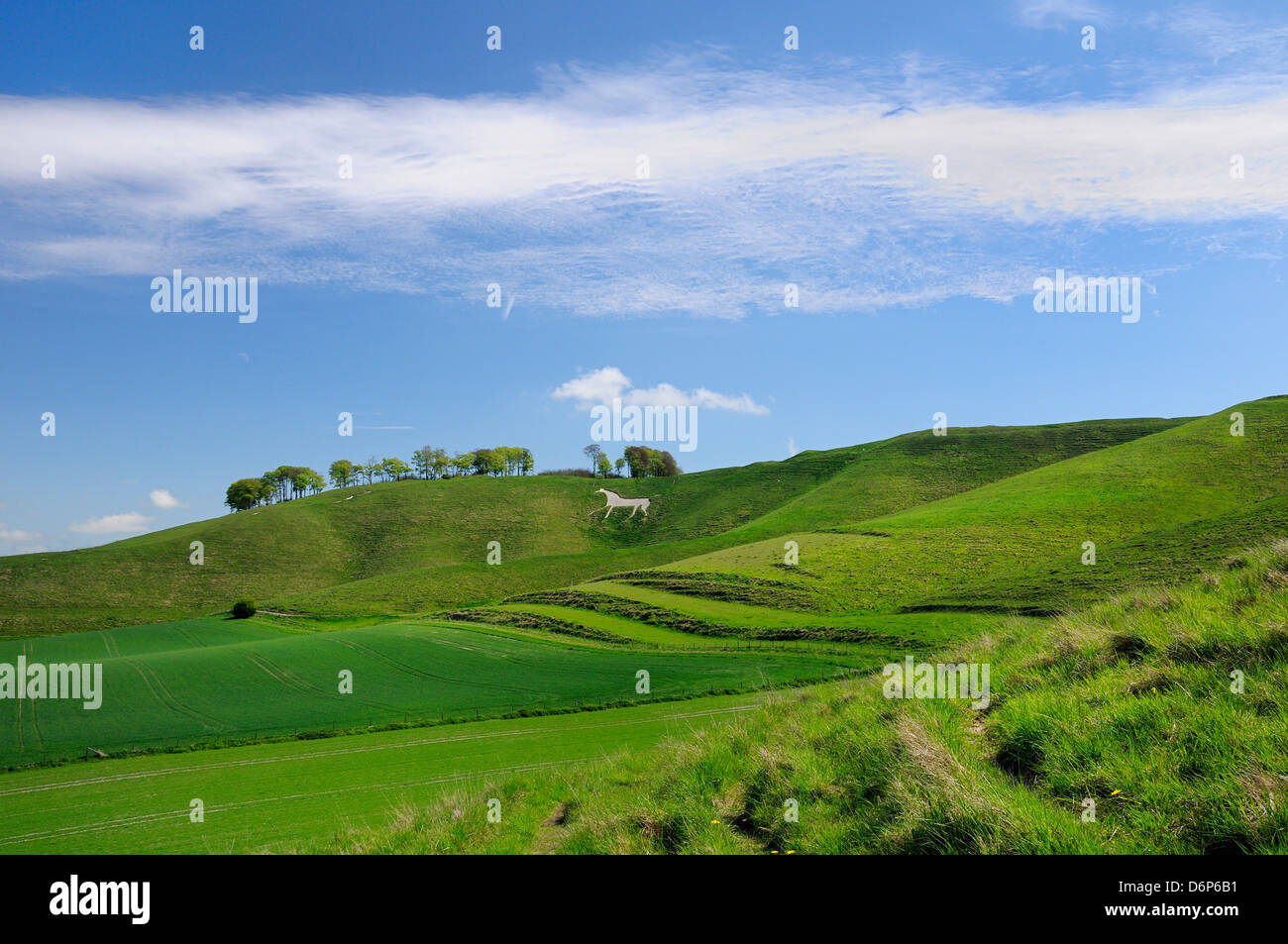 Cherhill white horse, first cut into chalk downland in 1780, Wiltshire, England, United Kingdom, Europe Stock Photo