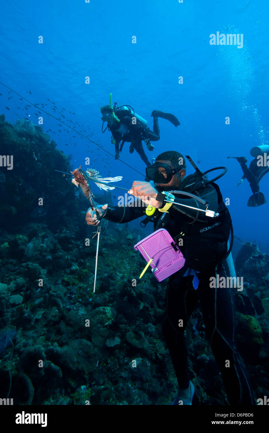 P. D. F] the complete diving guide: the caribbean, vol. 1: dominica.