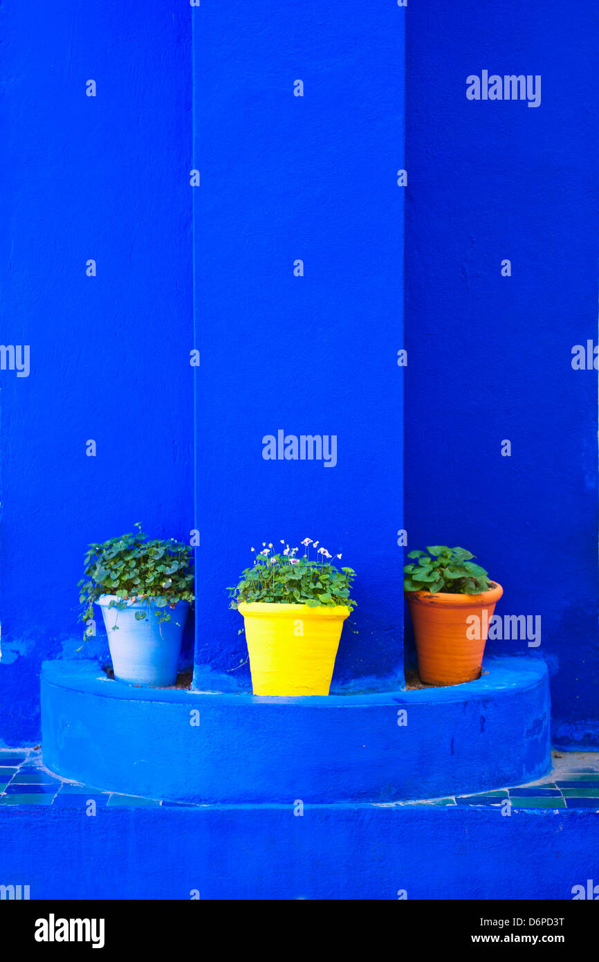 Potted plants and bright blue paintwork, Majorelle Gardens (Gardens of Yves Saint-Laurent), Marrakech, Morocco, - Stock Image