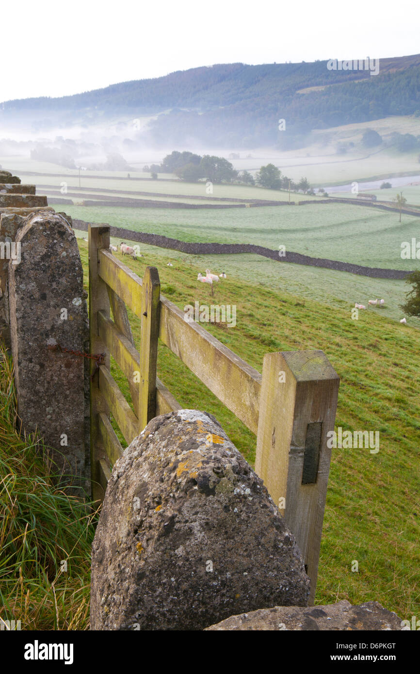 Gate in stone wall and field, near Burnsall, Yorkshire Dales National Park, Yorkshire, England, United Kingdom, - Stock Image