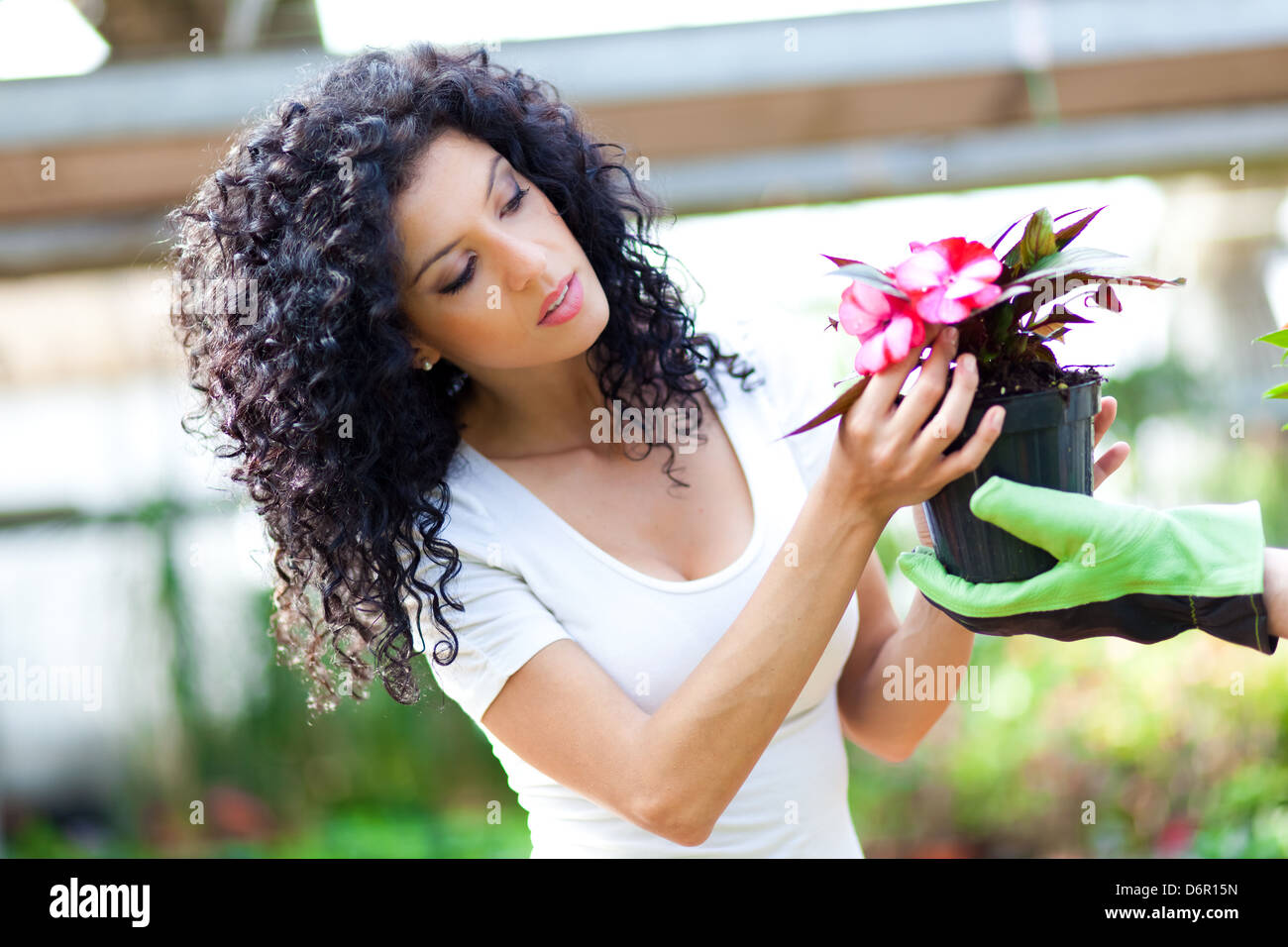 Portrait of a woman choosing flowers in a greenhouse - Stock Image