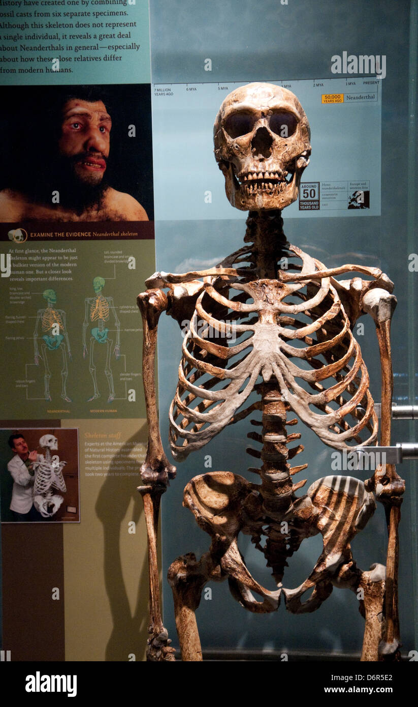 The Spitzer Hall of Human Origins in the American Museum of Natural ...