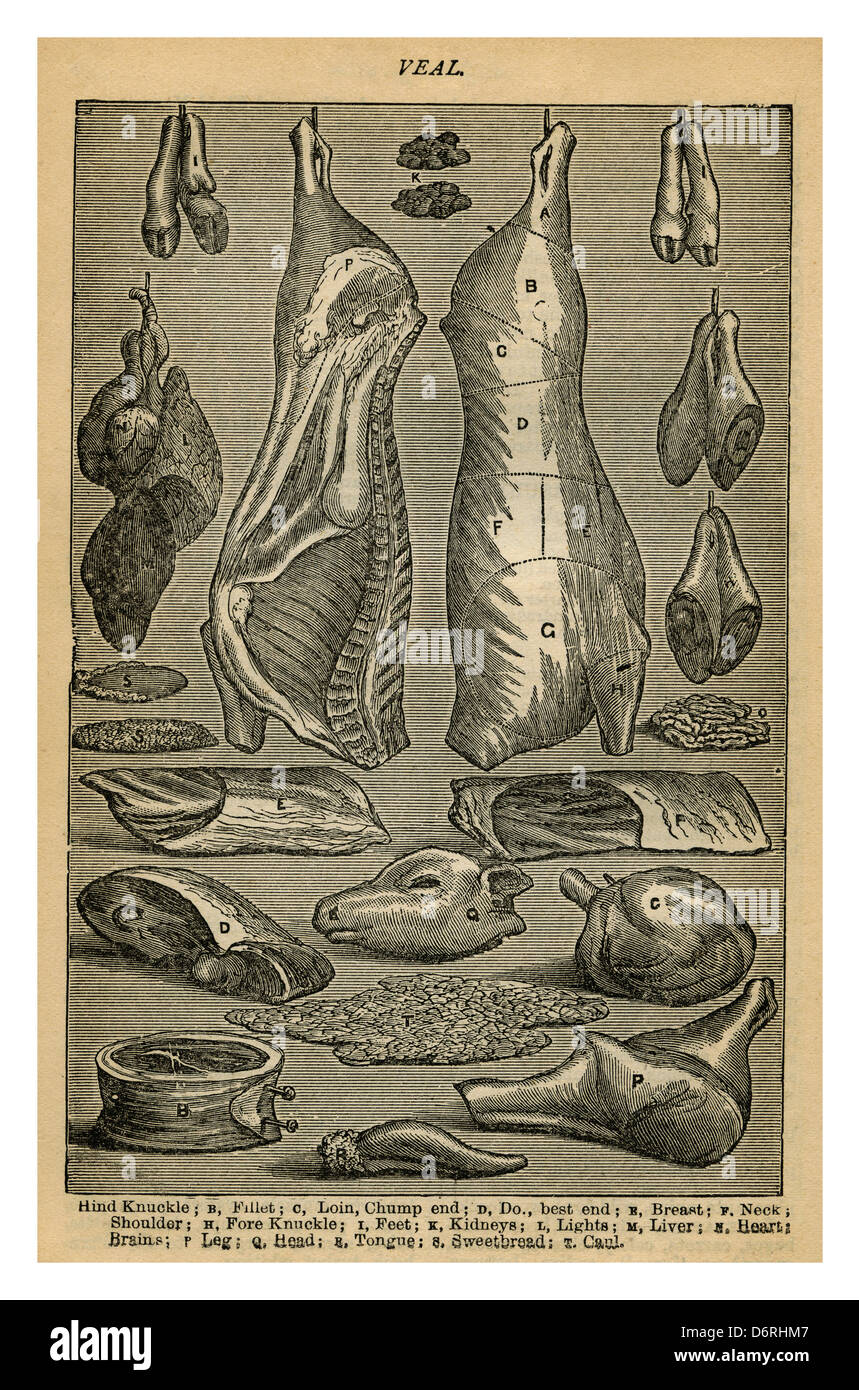 1890's Mrs Beetons Cookery Book illustration of variety of Victorian veal meat cuts - Stock Image