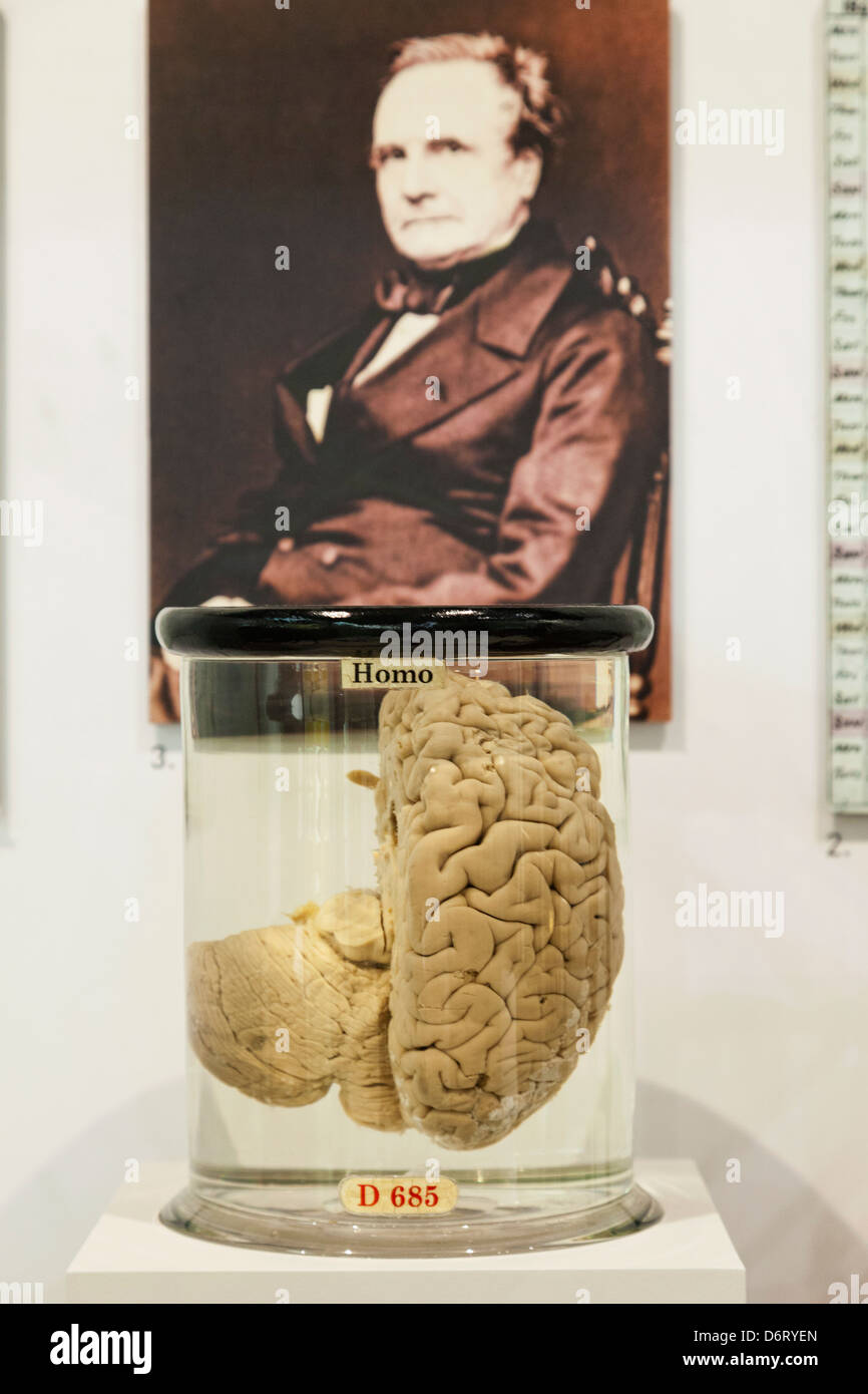 England,London,Kensington,Science Museum,Charles Babbage's Brain and Portrait (Father of the Computer) - Stock Image