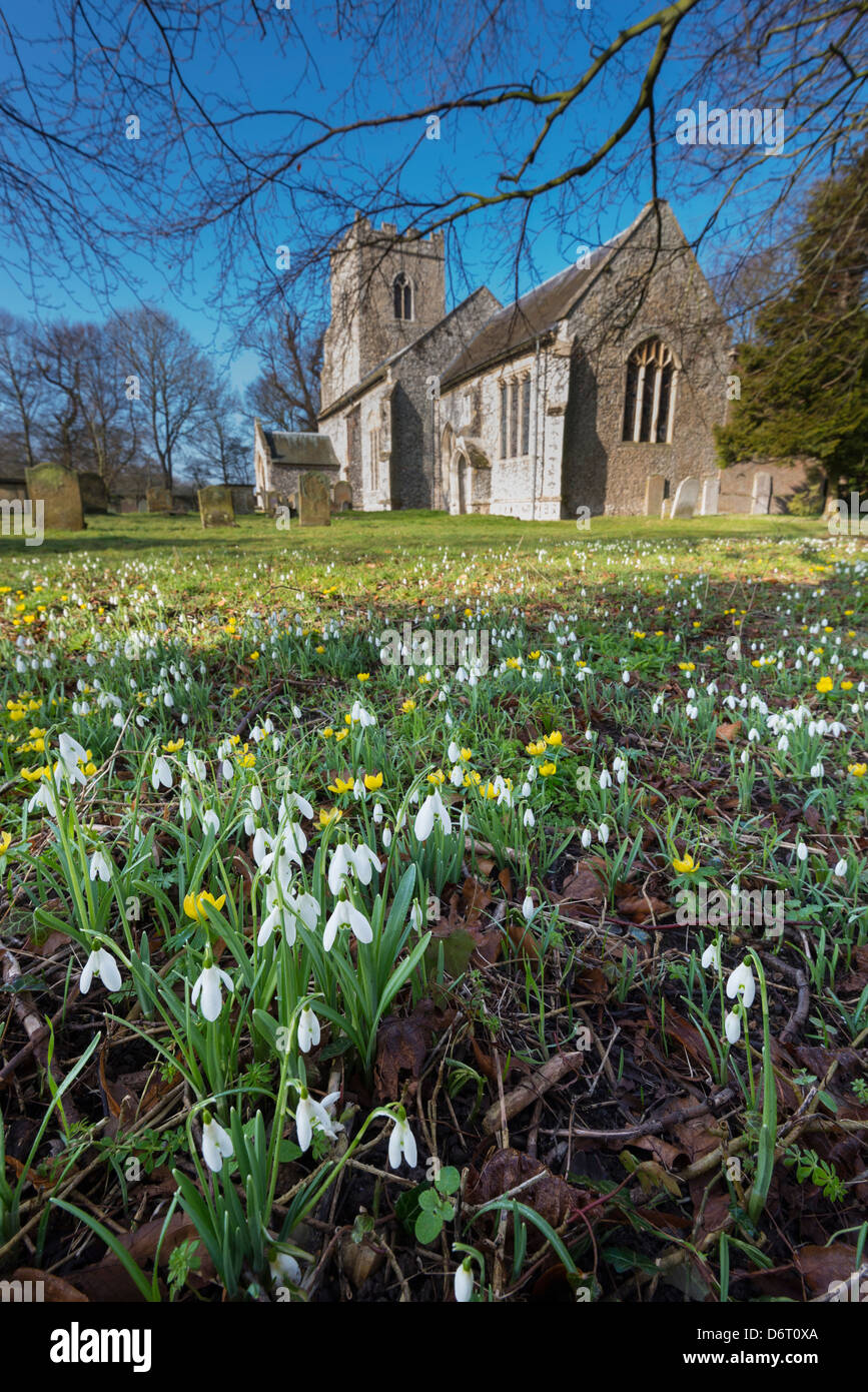 Snowdrops in the churchyard of St Mary Magdalene, Warham village - Stock Image
