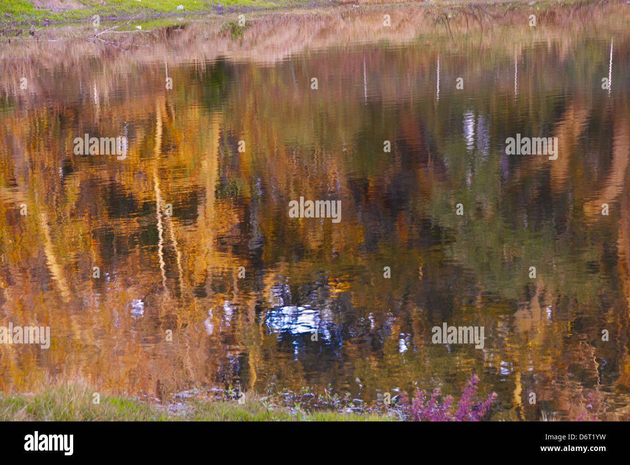 Water reflections in the Eagans Creek Greenway, 300 protected lands on Amelia Island in Florida, USA - Stock Image