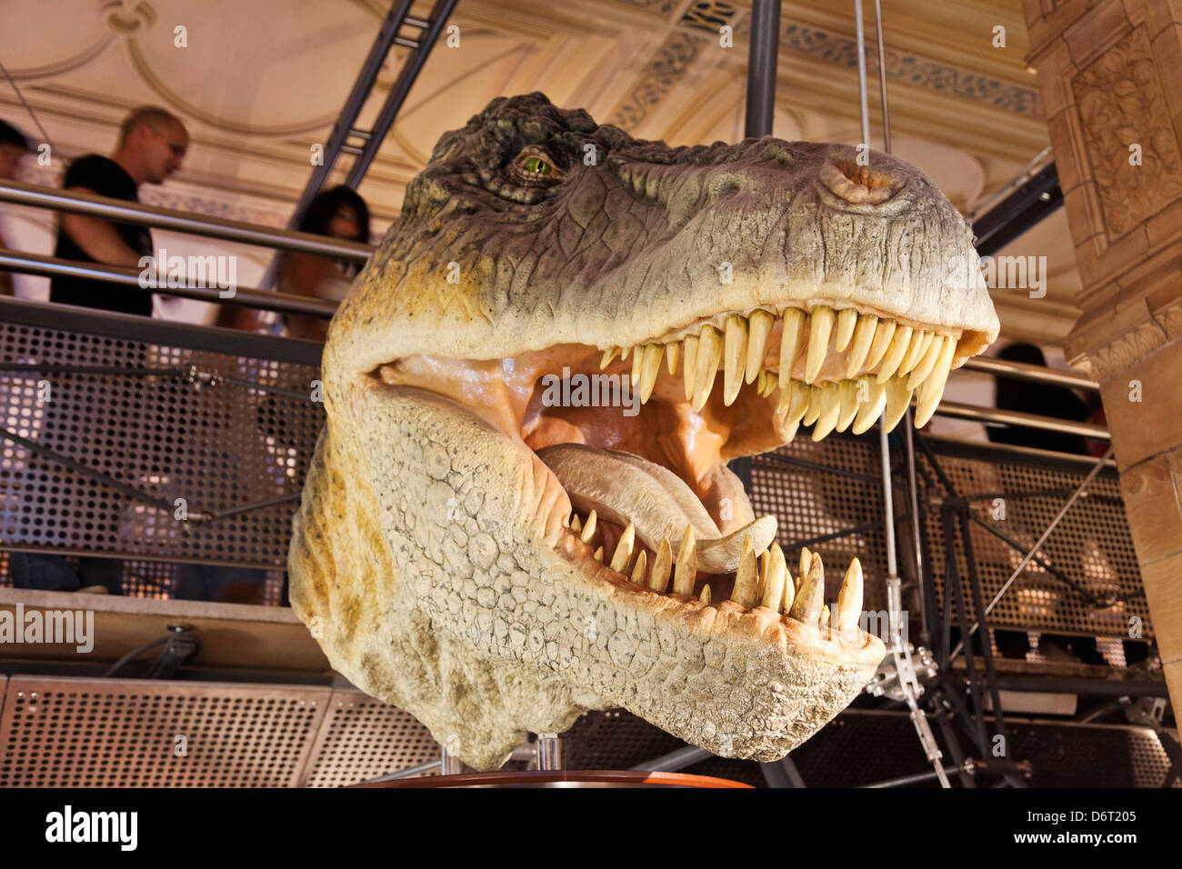 UK, London, Kensington, Natural History Museum, T-Rex Dinosaur exhibit - Stock Image