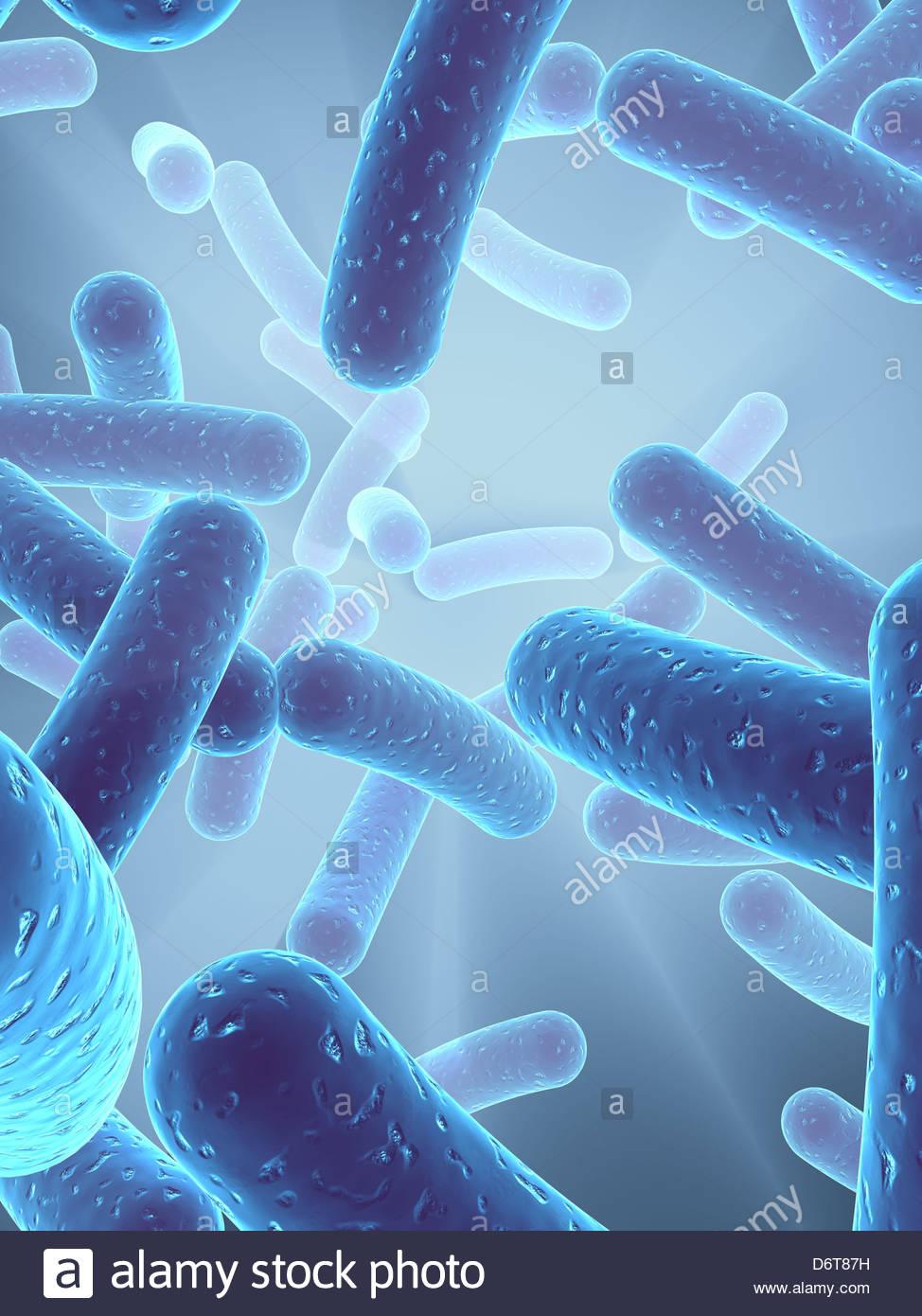 bacterium,medical illustrations - Stock Image