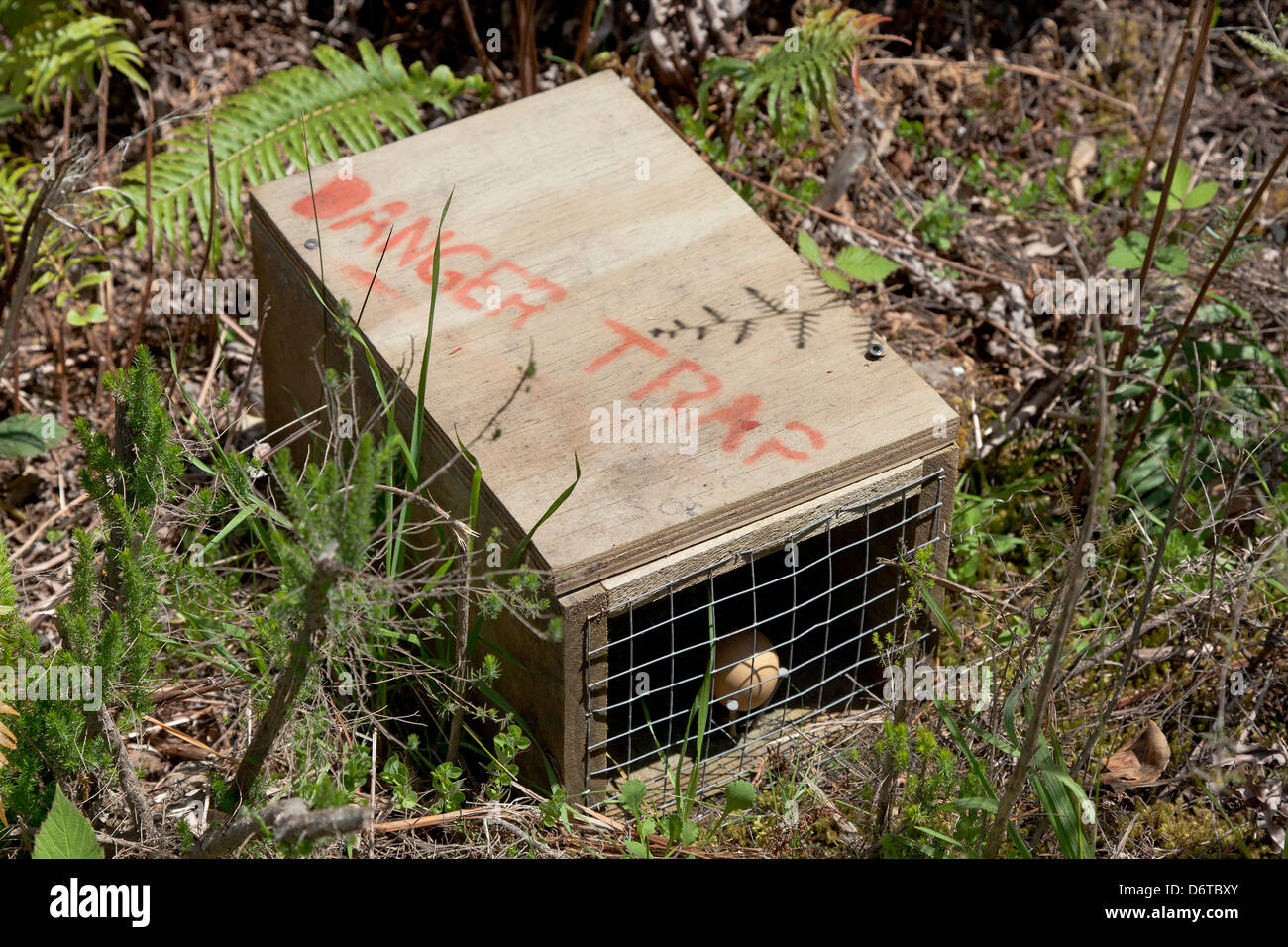 Poison trap for predatorsin the woods, New Zealand - Stock Image