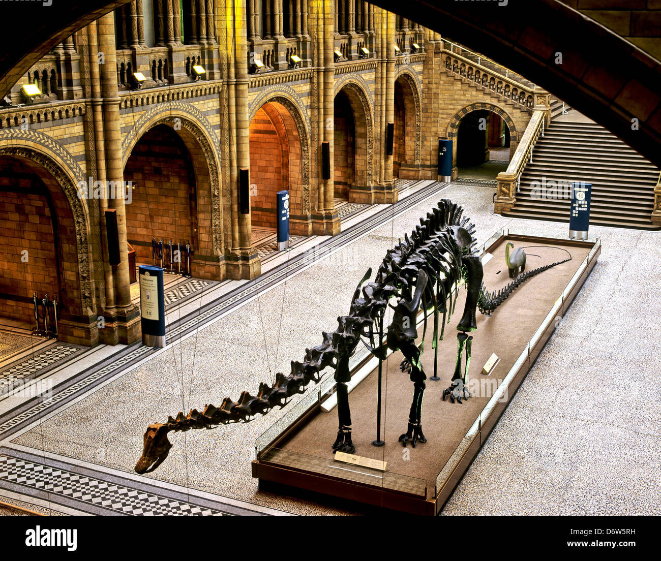 8414. Diplodocus skeleton, Natural History Museum, London, England, Europe - Stock Image