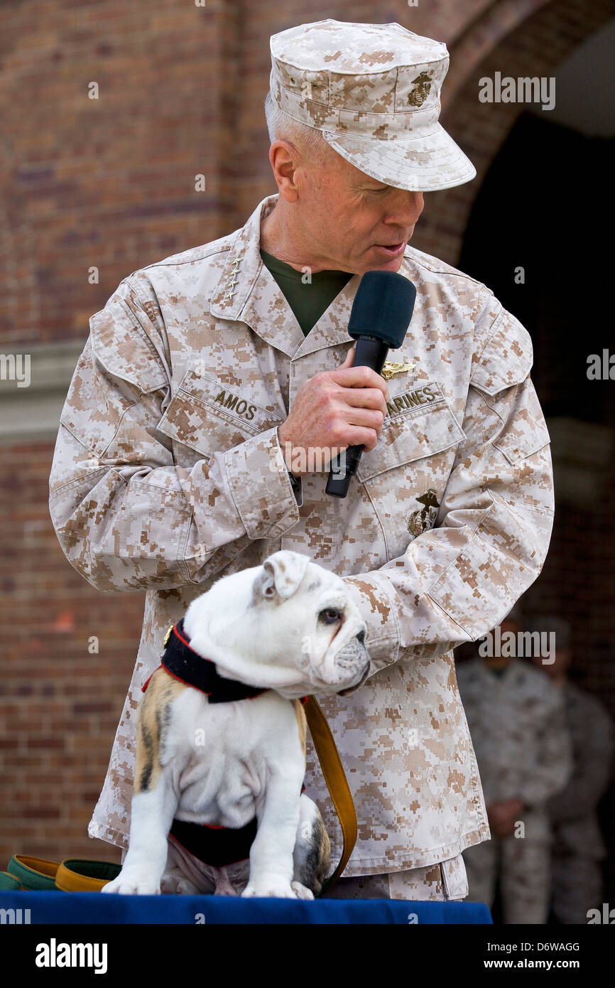 Commandant of the US Marine Corps Gen. James F. Amos pets incoming Marine Corps mascot Private First Class Chesty Stock Photo