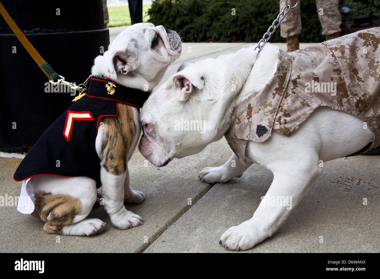 Marine Corps Mascot Dog Name