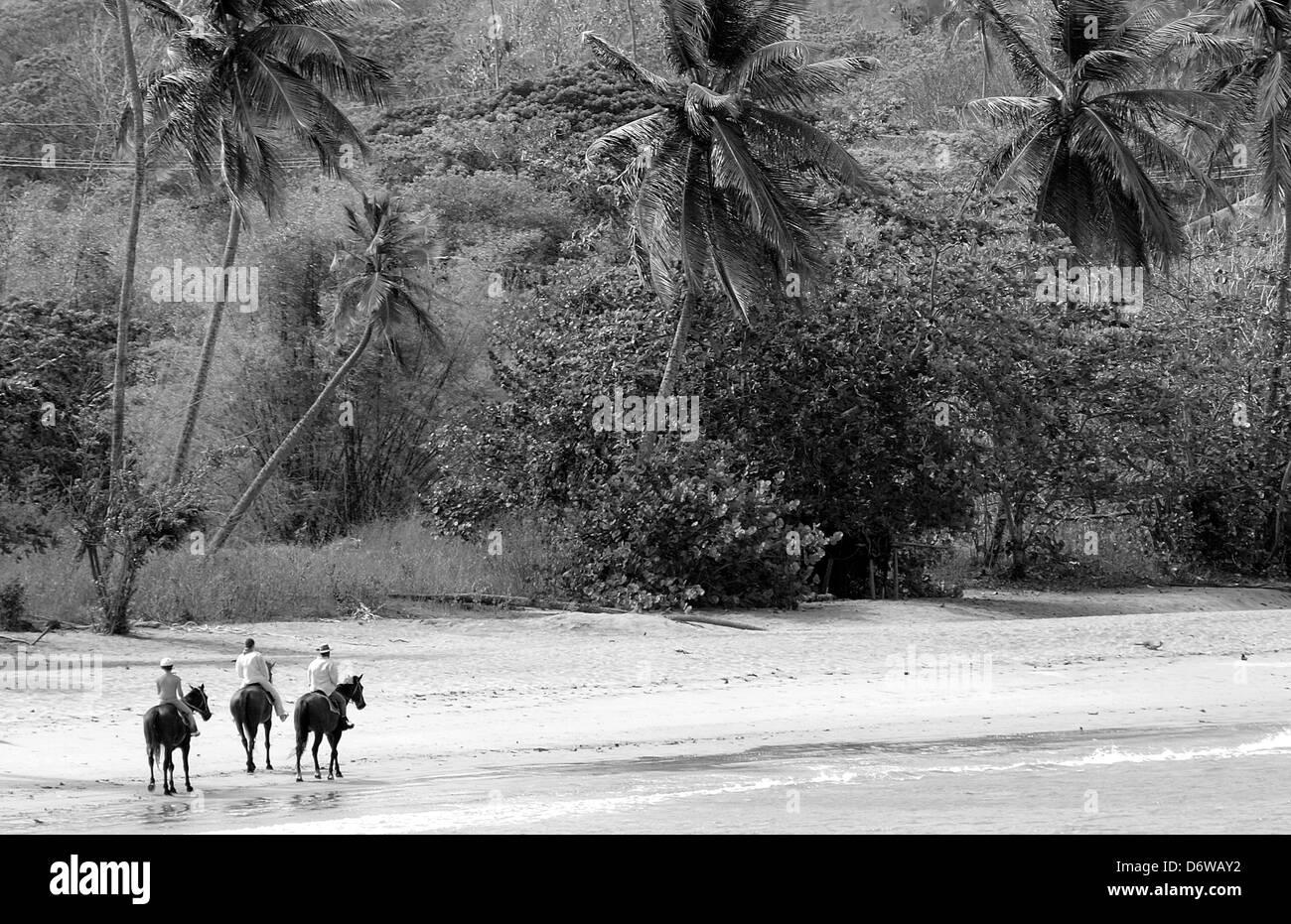 Trinidad and Tobago, Tobago, Courland Bay Horse Riding - Stock Image